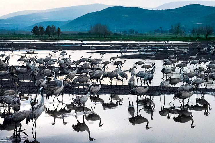 Cranes-at-Dusk_LandingPage_750x500