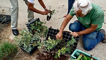 planting_JNF_345x195