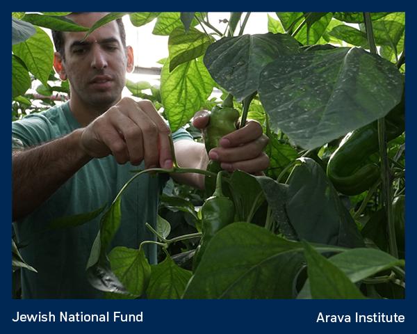 Arava Institute 2