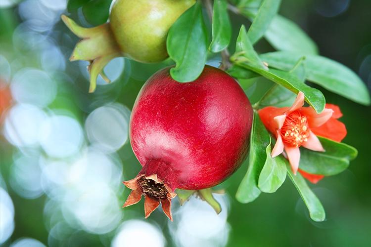Wfi-pomegranate-eventlanding