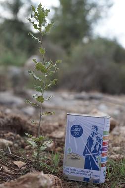 Tree blue box small